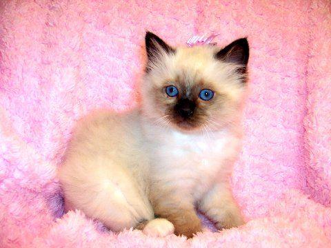 I want one of these kittens sooooo bad!!!