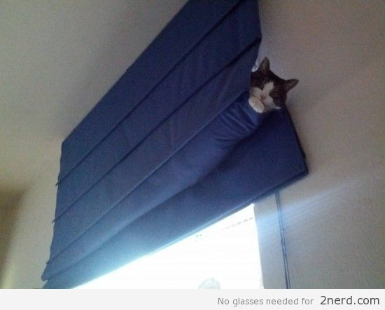 How To Keep Cats From Breaking Blinds Blinds Com In 2020 Cats Cool Pets Diy Cat Tree