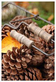 autumn romance .. X ღɱɧღ ||