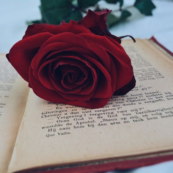 Red roses and old books