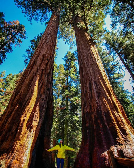 Yellow shell jacket is perfect for pictures with sequoias.  Gotta love California.  Photo from @ bmatthewimages Instagram.