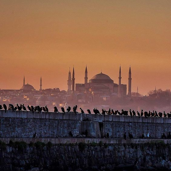 Seabirds of Istanbul gather at every sunset across from the glorious Hagia Sophia to discuss the day's events :) ⠀ ⠀ :senertekci/IG⠀