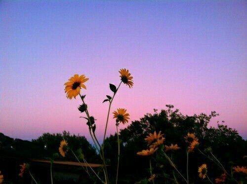 Flowers Sky And Sunflower Image Aesthetic Backgrounds Aesthetic Desktop Wallpaper Aesthetic Wallpapers