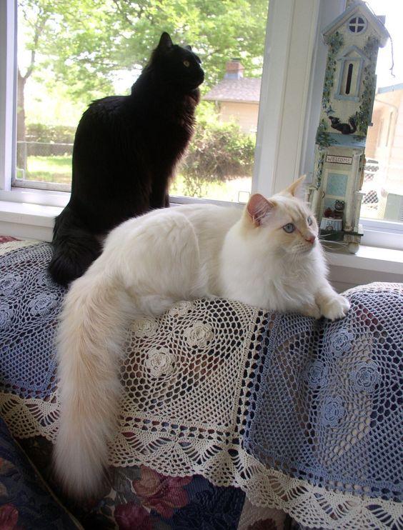 Beautiful cats...♥...