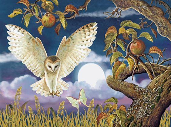 """Barn Owl in the Apple Orchard"" par Rosiland Solomon"