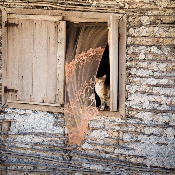 Le chat et le rideau, par Franck Vervial   Madagascar 2011