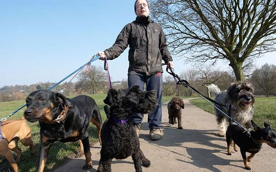 Dog walkers earn a fifth more than the average UK salary (and a lot more in   London) by working just two weeks out of every month