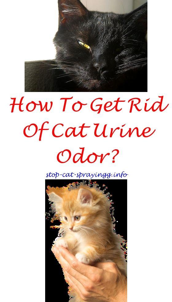 Cat Spray Smell Pet Odors Cat Spray Cat Spray Smell Male Cat Spraying