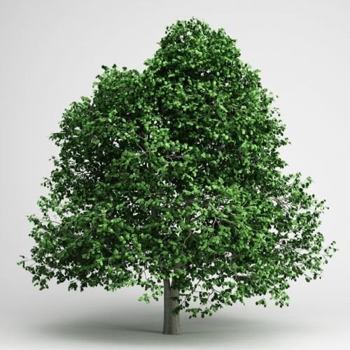 Pin On Garden Plants Free 3d Models