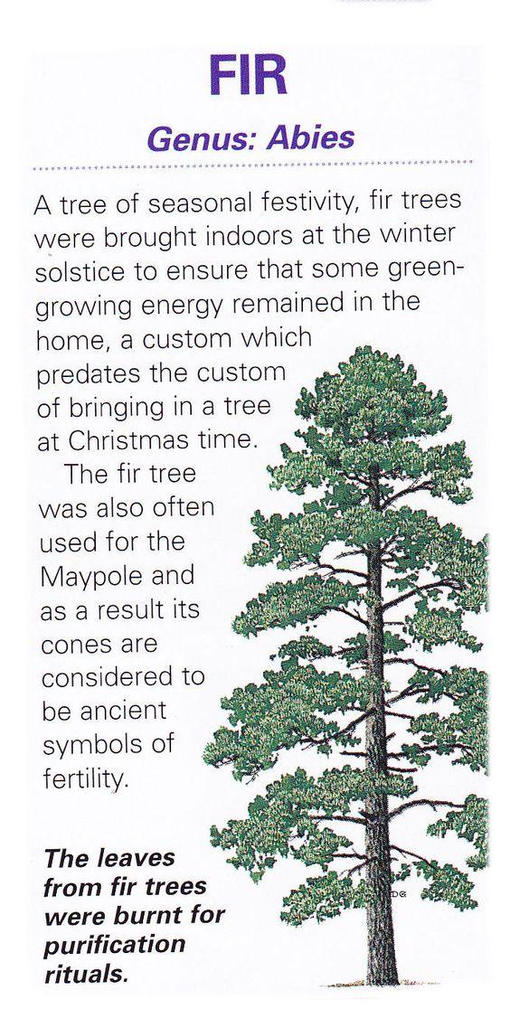 Sacred celtic tree - Fir: