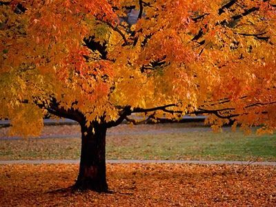 i want to lay under that tree in all the leaves