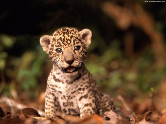 Los animales salvajes pueden atemorizar, pero incluso ellos son increíblemente tiernos cuando son pequeños.
