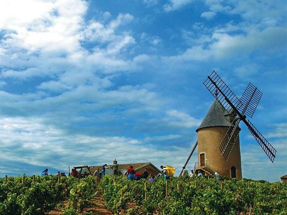Visita a Vinícola Georges Duboeuf - Borgonha
