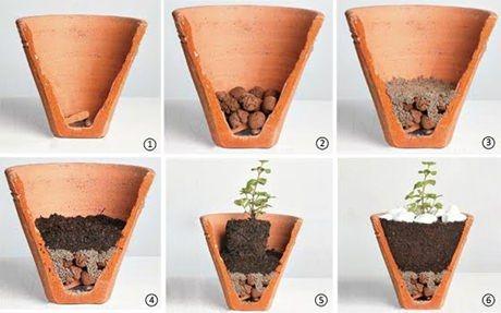 Para plantio em vaso, o processo é bem parecido. Coloque argila expandida ou brita no fundo do vaso para a drenagem, acrescente uma manta de poliéster e em seguida a terra com o composto. Depois basta colocar a muda dentro do vaso e acertar a terra em volta.