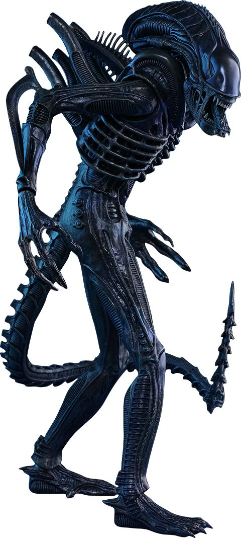 12973221 1014526068593894 140448093350062994 O Png 480 1069 Aliens Movie Alien Vs Predator Warrior Movie
