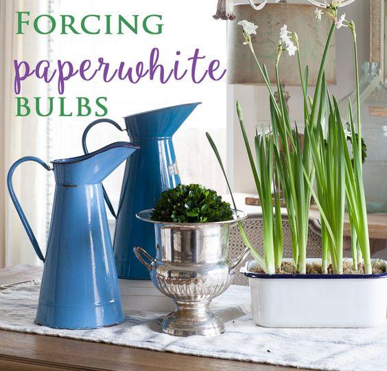 How to Force Paperwhite Bulbs - Cedar Hill Farmhouse