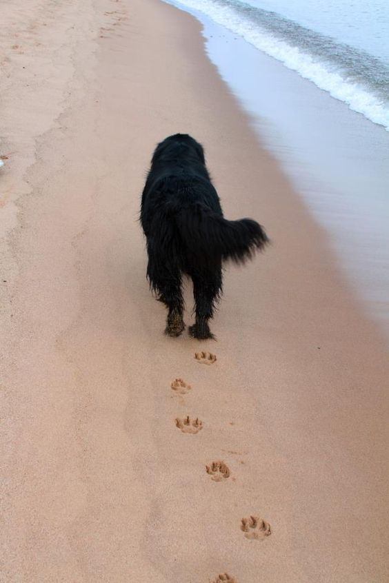 footprints in my heart.. I'm going to miss my Tucker... I'll have another Black Newf one day soon.