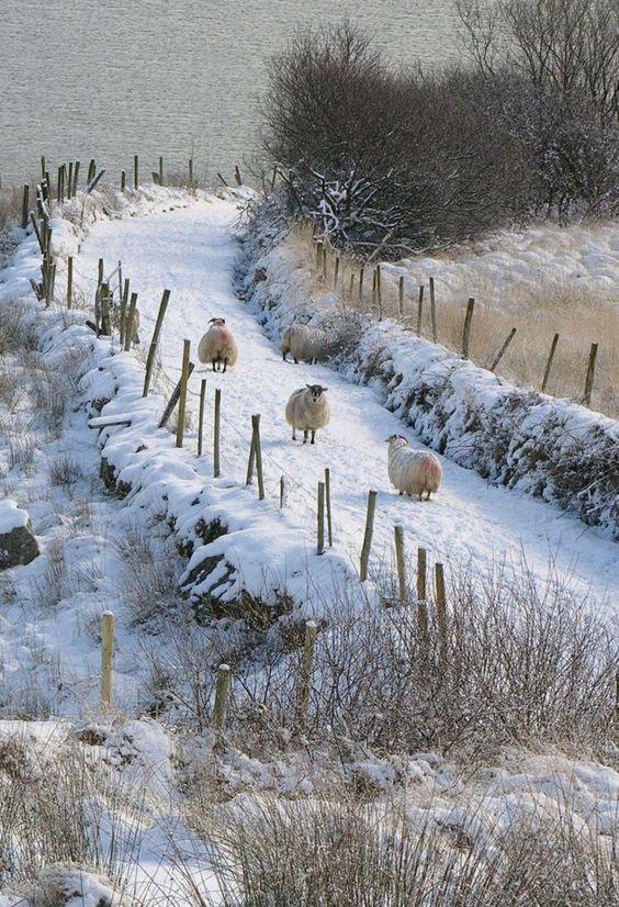 paysage de neige campagne id es peinture pinterest