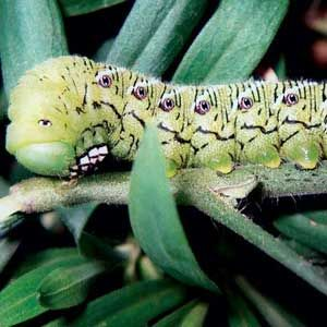 Having trouble with insect pests?