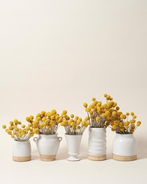 Billy Buttons Billy Buttons Farmhouse Pottery Dog Food Recipes