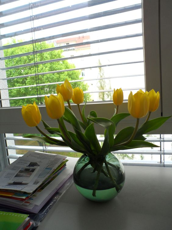 tulips at my apt
