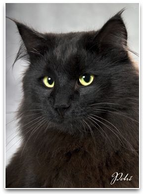 Handsome Cat - that's Mr. Handsome to you. :-)