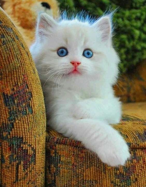 Do You Know Cats Find Out With 11 More Random Amazing Cat Facts