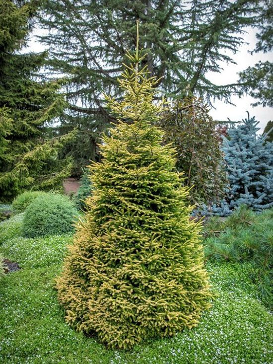new trees and shrubs for 2016