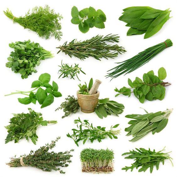 Травы от А до Я: Essential Oil, Health Remedies, Top 10, Inflammatory Herbs, Herbs Spices, Anti Inflammatory, Herbal Medicine, Healing Herbs
