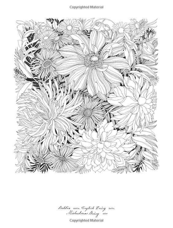 floribunda a flower coloring book leila duly 9781780677682 amazonsmile books adult coloring pages pinterest flower colors colour book and flower
