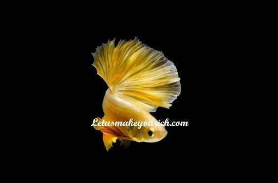 Even a fish could stay out of trouble if it would just learn to keep its mouth shut. ― Cherry Nguyen