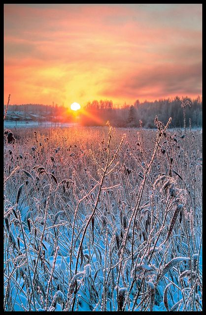 Snowy sunset, Finland  (by Samuli Sivonen on Flickr):