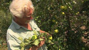 Landwirte befürchten Ernteausfälle