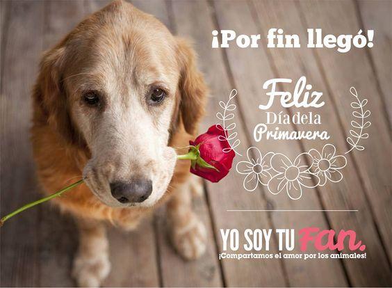 Acción Publicitaria Dia de la Madre Yo Soy Tu Fan