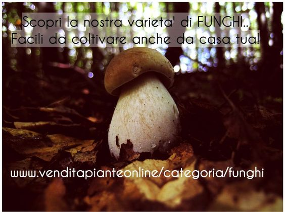http://www.venditapianteonline.it/categoria/funghi/