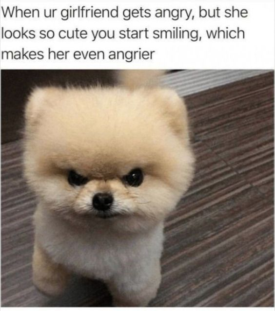 This Dog Memes Just Made My Day Riotous Memes Dogsmemes Puppy Pet Love Cute Pets Dog Animal Memes Funny Animal Memes Funny Animal Pictures