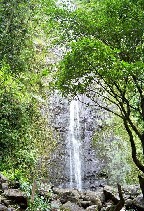 Manoa Falls5