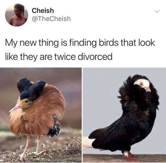 A Flock Of Bird Memes That'll Have You Squawking