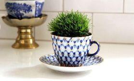 Tea cup, coffee, maceta de tazas, plants mug www.PiensaenChic.com