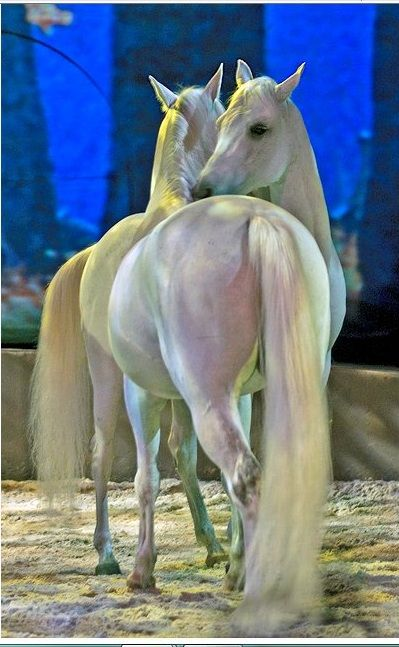 Cavalia - Liberty. If you love horses, you must see this show.: