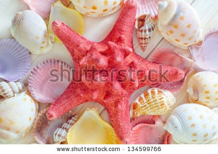 Hanging Sea Shells Stock Photos, Images, & Pictures | Shutterstock