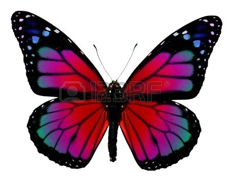 Monarch butterfly with fantasy colors