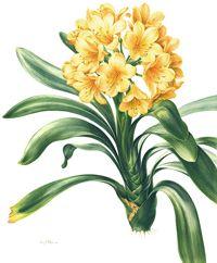 Botanical Art School of Melbourne