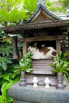 Japan. Cat sleeping in an altar