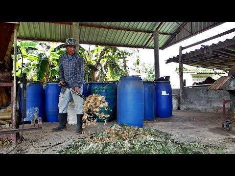 ว ธ หม กหญ าเนเป ยร ใช เป นอาหารว วในช วงฤด แล ง Youtube