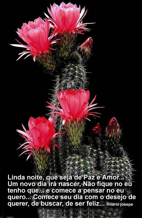Pin De Marlene Em Cactos E Flores Com Imagens Mensagem De Boa