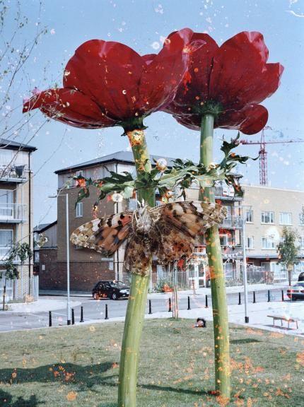 hackney flowers Stephan Gill:
