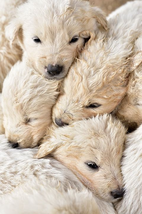 The Top 10 Cutest Puppy In The World For Kids And Families 2020 Dog Friends Cheap Puppies Child Friendly Dogs