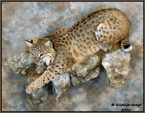 Item Description This Large Bobcat Has Beautiful Soft