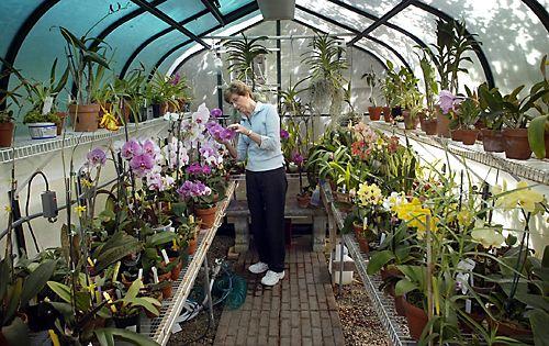 www.orchidcarelady.com